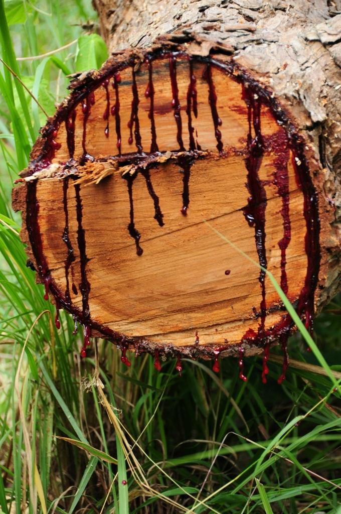 Дерево истекающее кровью