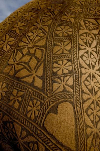 Ходячие ковры пустыни