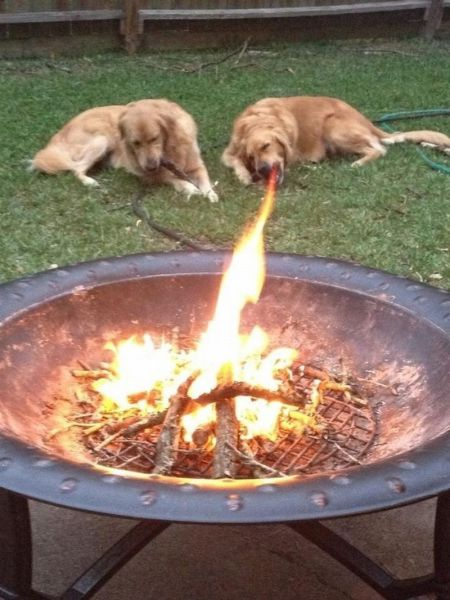 Собачьи фотобомбы