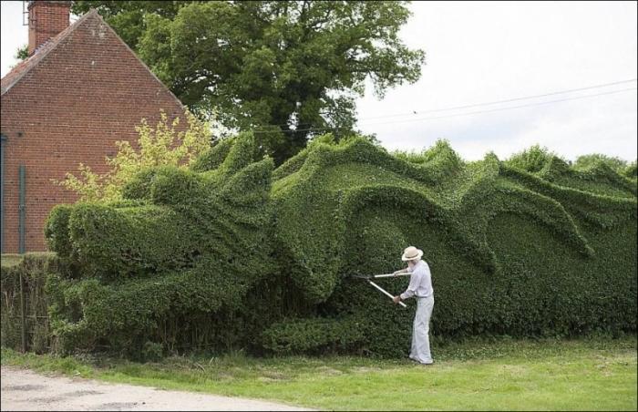 Живая изгородь в форме дракона