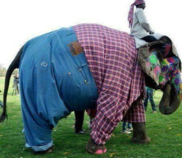 Горячий привет из Индии