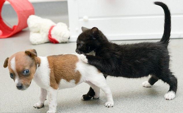 Сестры – кошечка и щенок