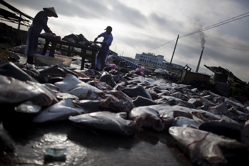 Рынок акульих плавников