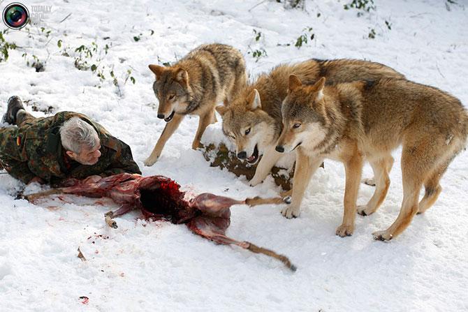 Wolfparkwernerfreundingermany9